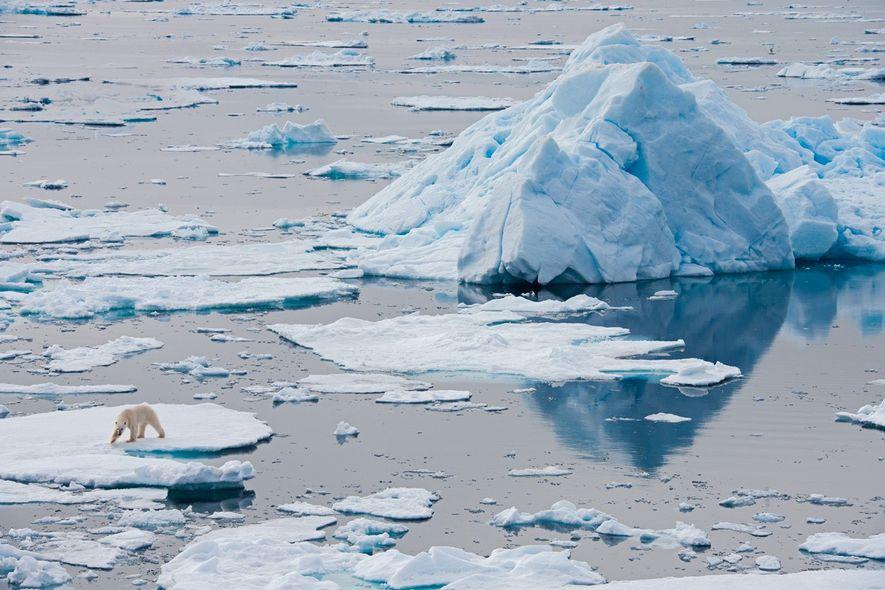 Un ours blanc se tient sur une plaque de glace, au large de l'archipel norvégien du …