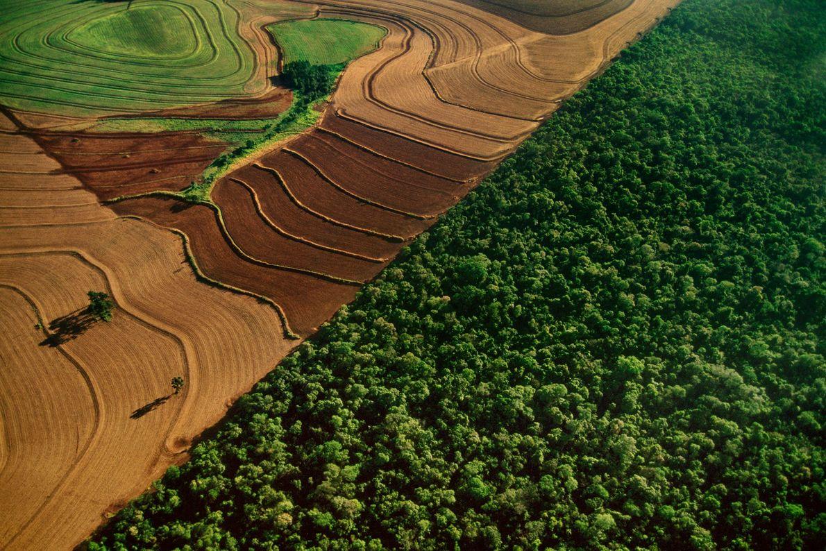 L'Amazonie perd chaque année l'équivalent de près d'un million de terrains de football recouverts de forêts, ...