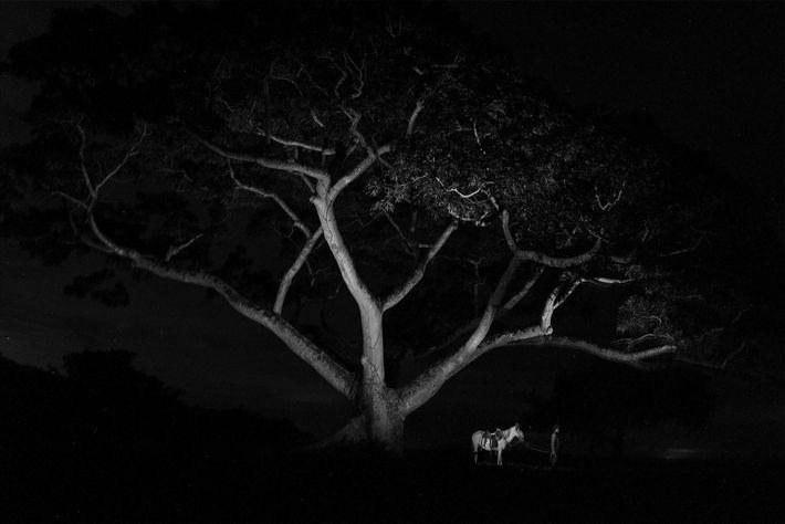 Un cheval se tient près d'un enclos à bétail à Hato Santana dans le Casanare.