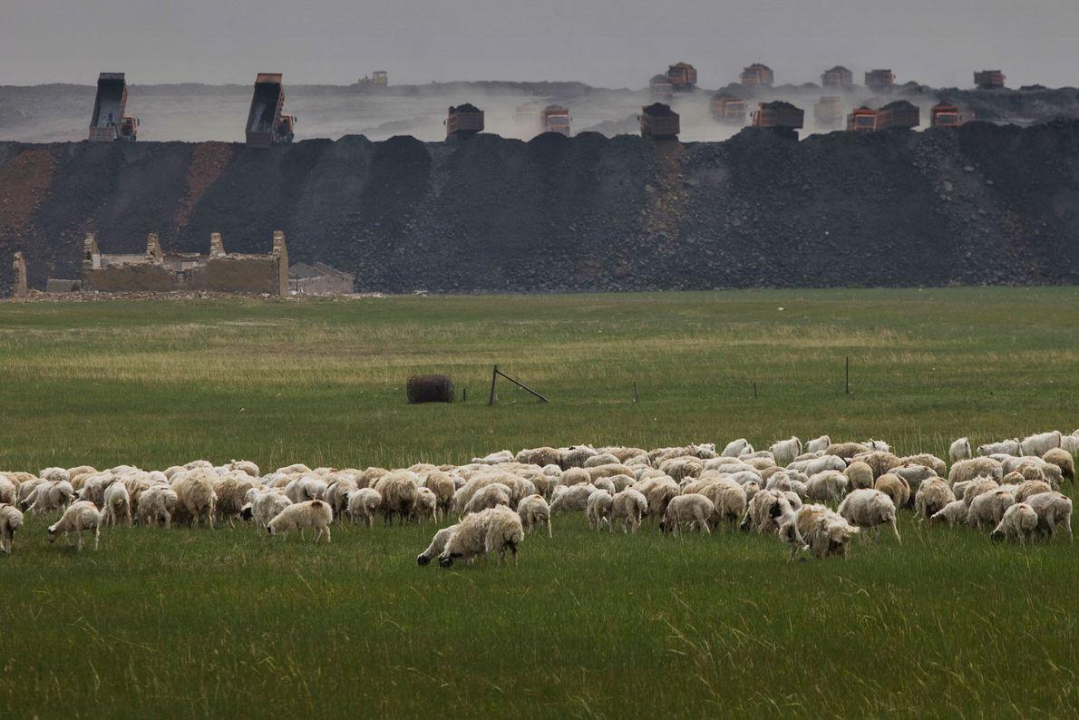 Des moutons paissent devant la mine à ciel ouvert de Shenhua, qui achemine du sable et ...