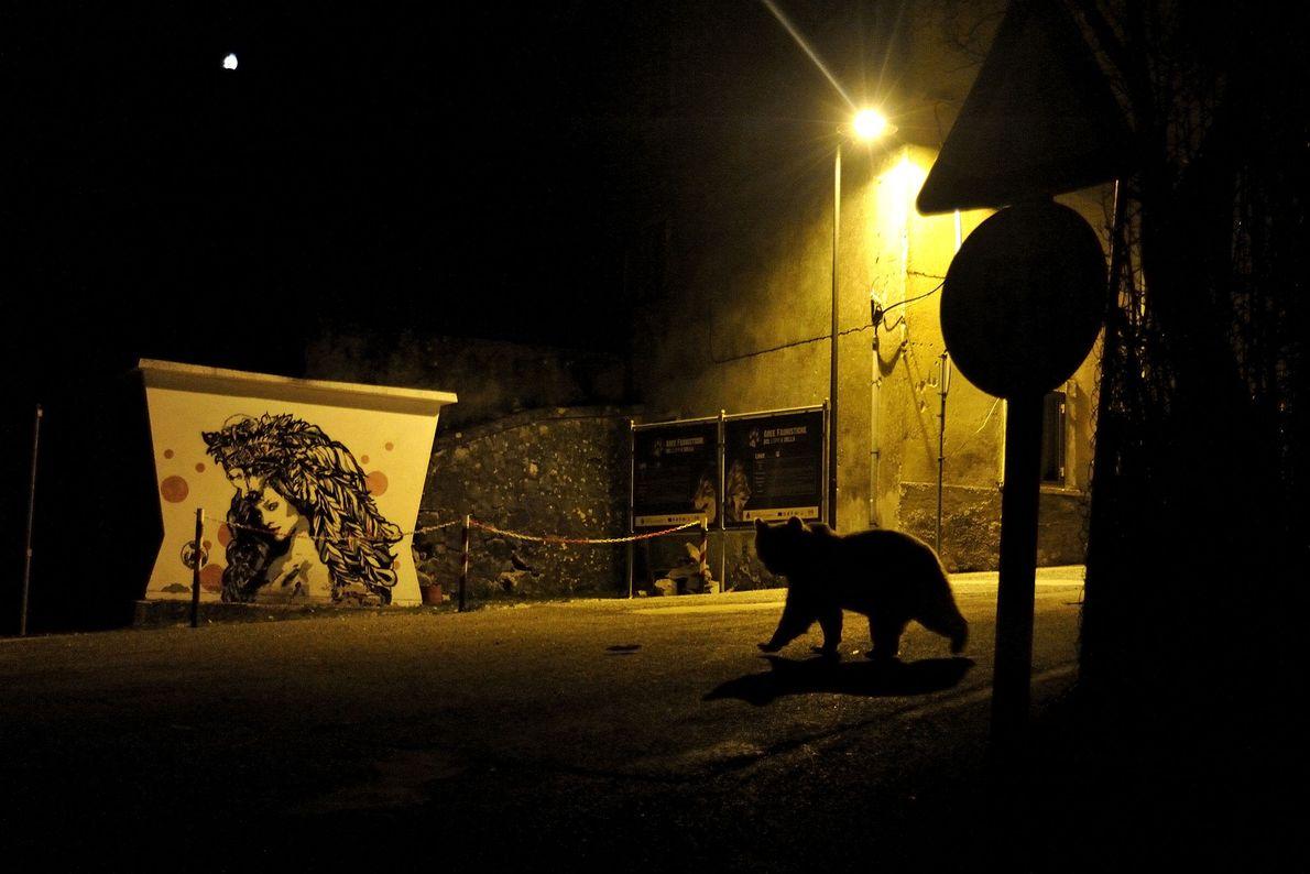 Marco Colombo s'est imposé dans la catégorie « faune urbaine » avec la photo d'un ours ...