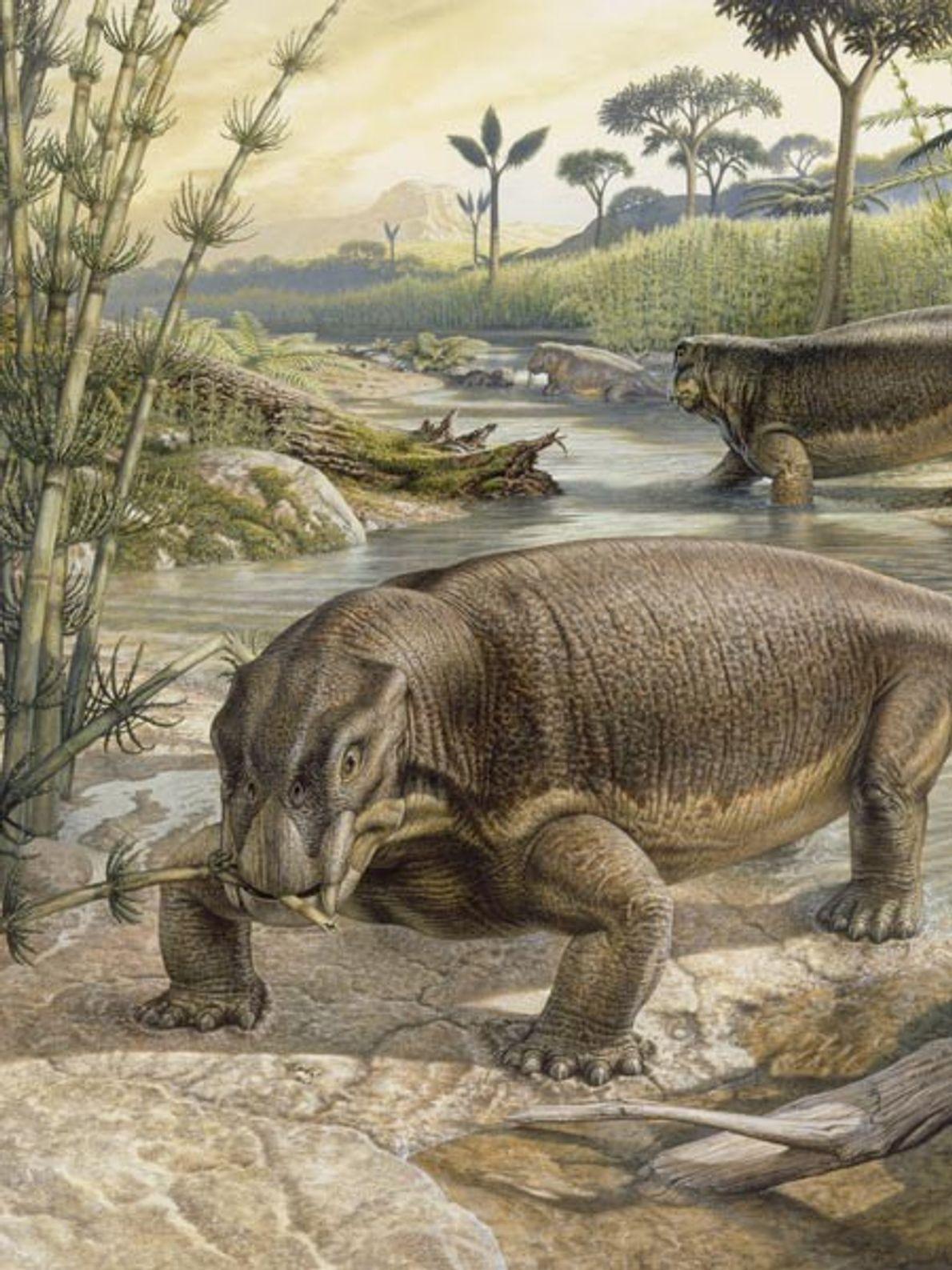 Cette illustration représente un lystrosaure en plein repas près d'un ruisseau. Reconnaissables à leur tête plate ...
