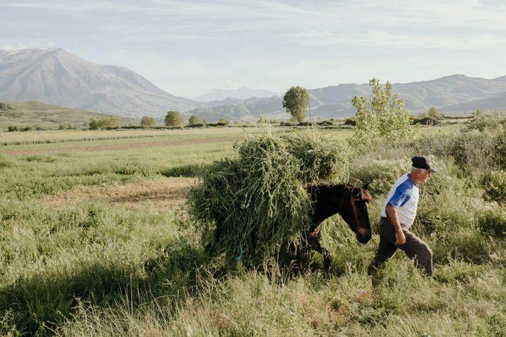 Petrit Canaj, dans ses champs près du village de Kuta. Si un barrage est érigé à ...