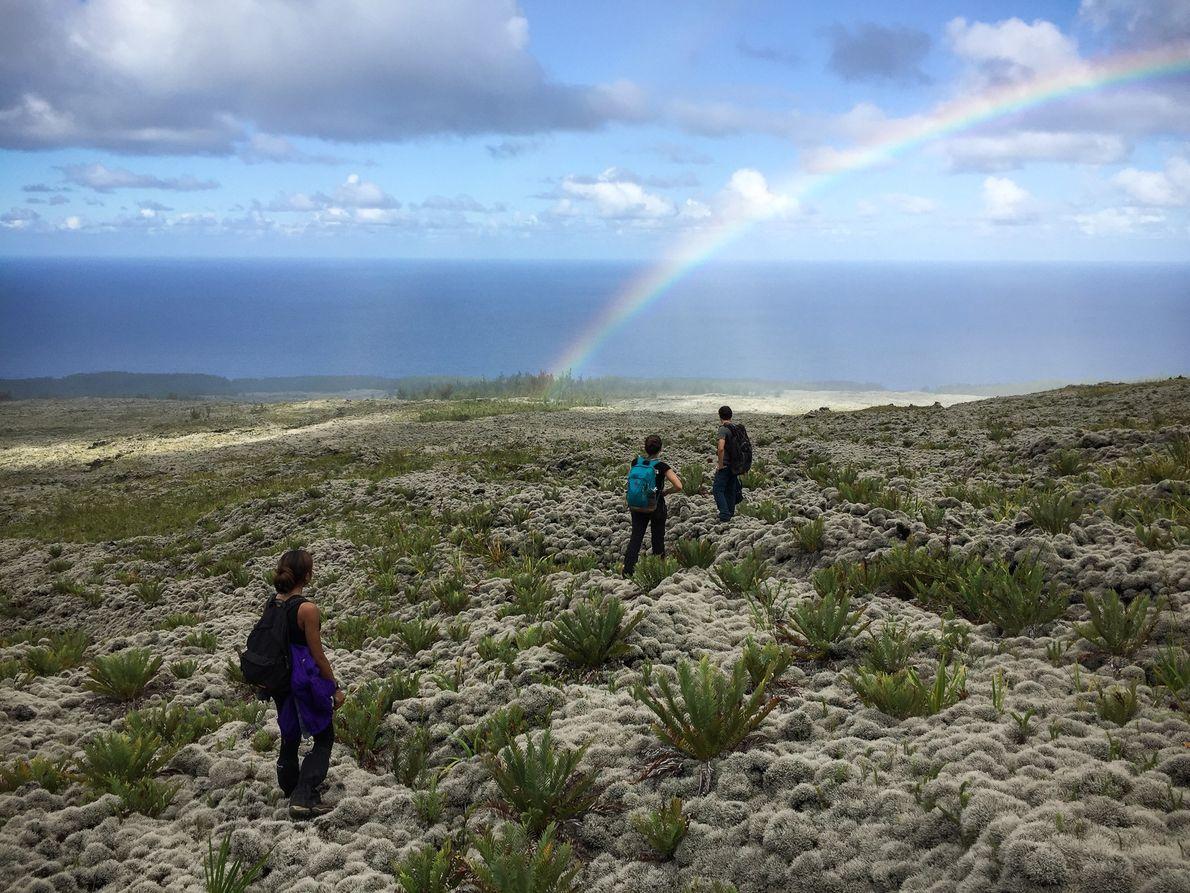 La Réunion compte encore 30 % de milieux indigènes, mais Sébastien est inquiet pour l'avenir : ...