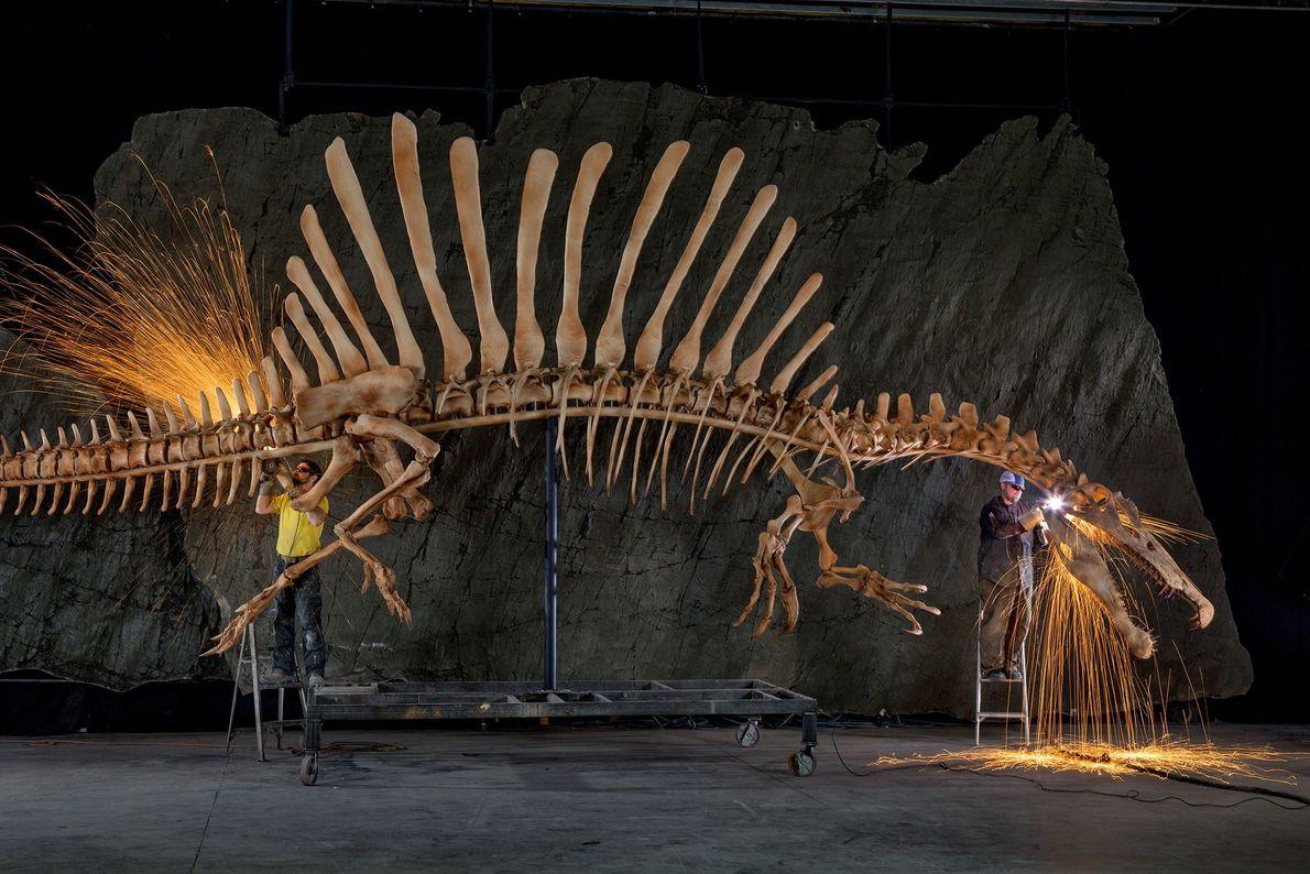 Les employés d'un musée apportent les dernières finitions à la fidèle reconstruction du squelette en taille ...