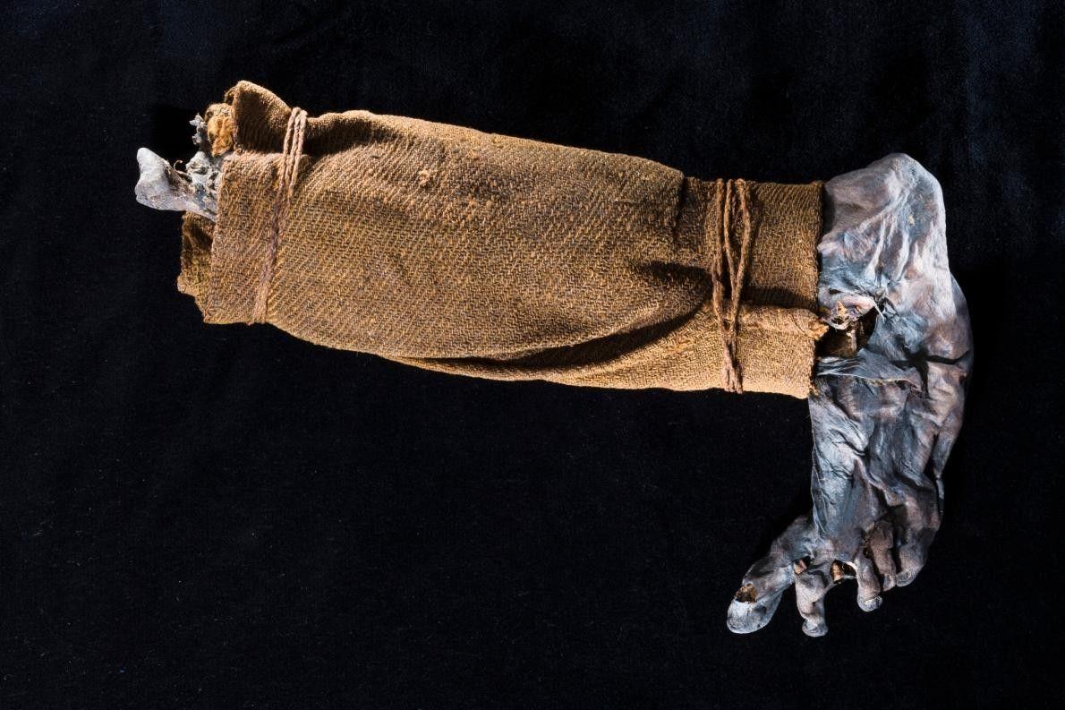 La jambe d'une momie de Tourbière découverte en 1944. Des parties de ces momies, préservées pendant ...