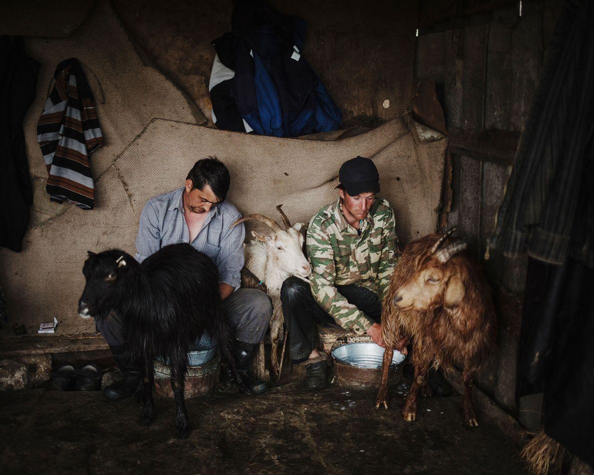 À Beshgioz, en fin de journée, des agriculteurs traient leurs moutons et leurs chèvres.