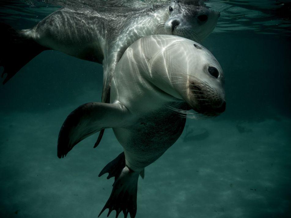 La beauté naturelle de l'océan en images