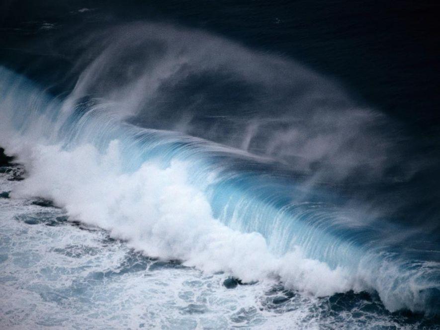 Les océans, plus grand habitat naturel de notre planète