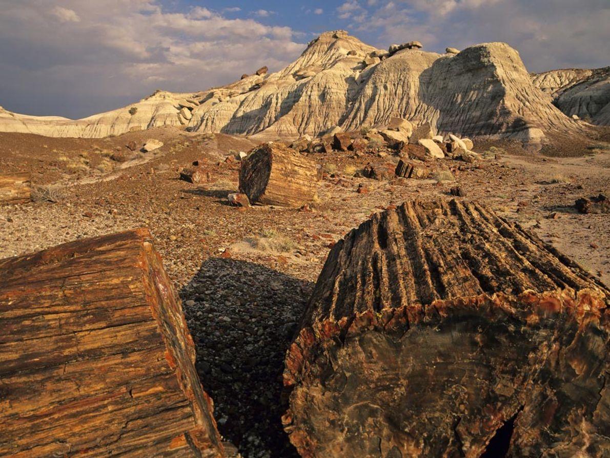 Des rondins de bois pétrifié jonchent le sol du parc national de Petrified Forest en Arizona. ...