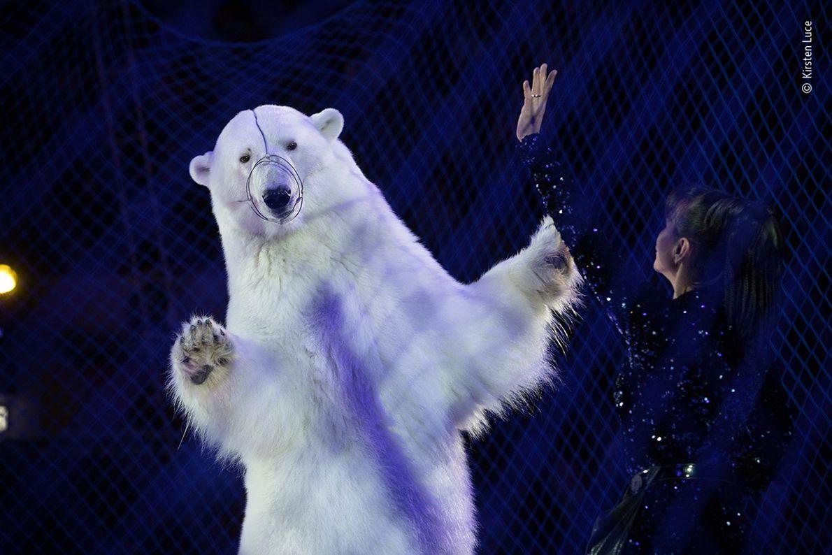 Kirsten Luce a remporté le prix de la meilleure image dans la catégorie « Photojournalisme animalier ». L'ours polaire ...