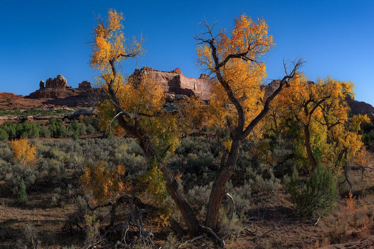 Parc national de Canyonlands, Utah