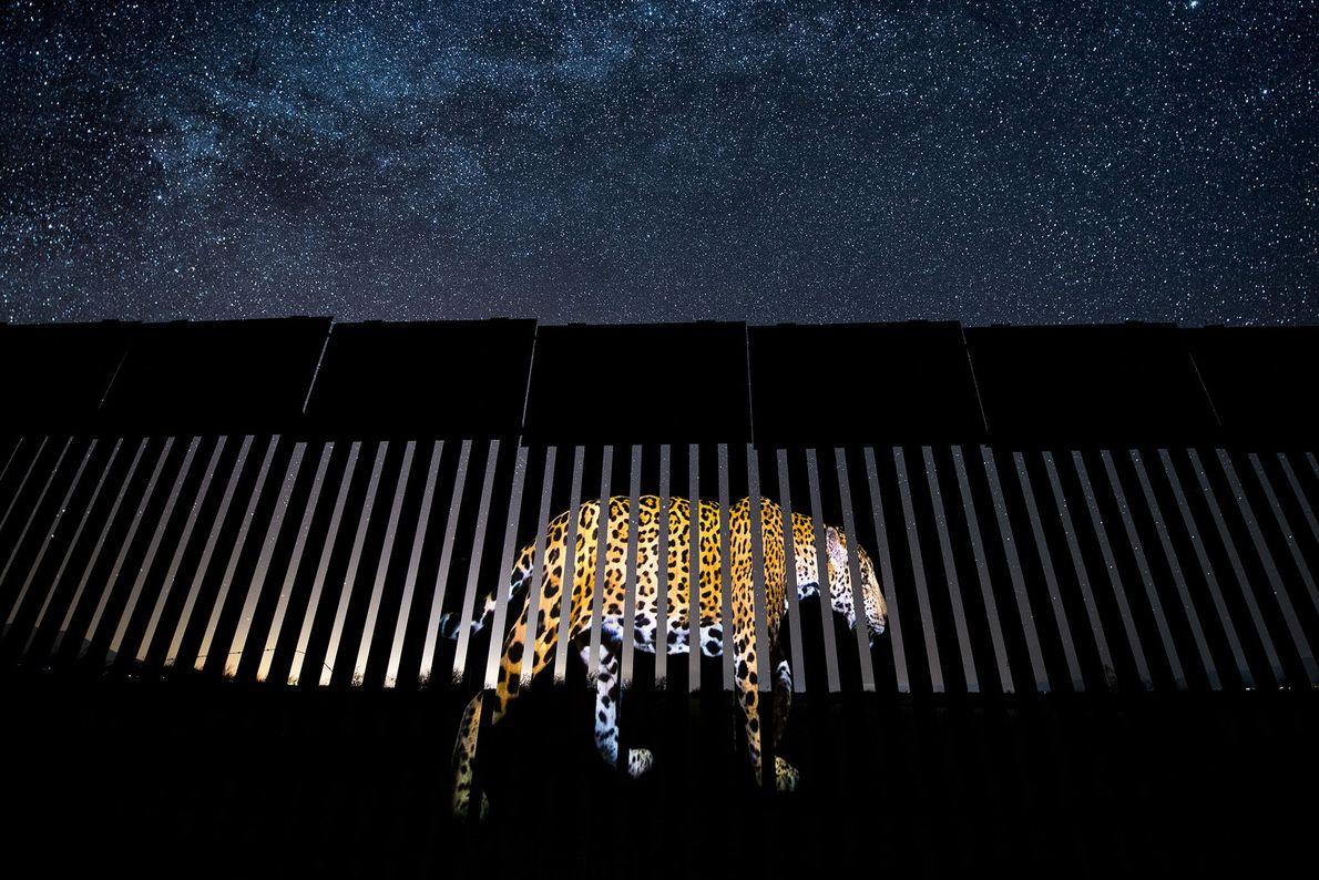 Le photojournaliste mexicain Alejandro Prieto a remporté le prix du photojournalisme animalier dans la catégorie meilleure ...