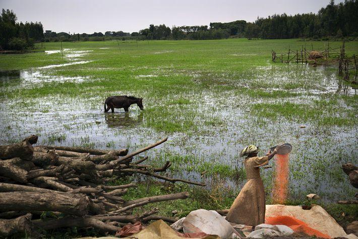 Une femme s'occupe du grain pendant la saison des pluies près de Bahir Dar, en Ethiopie. ...