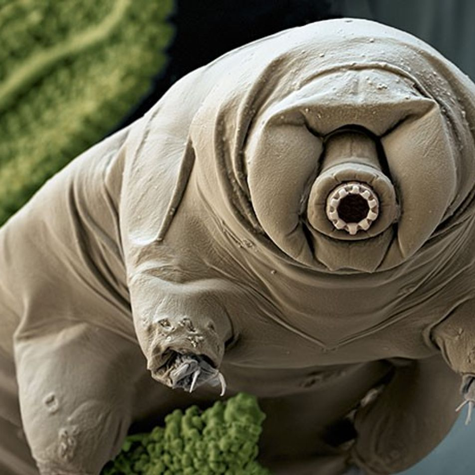 Cet animal pourrait résister à tout, même à l'apocalypse