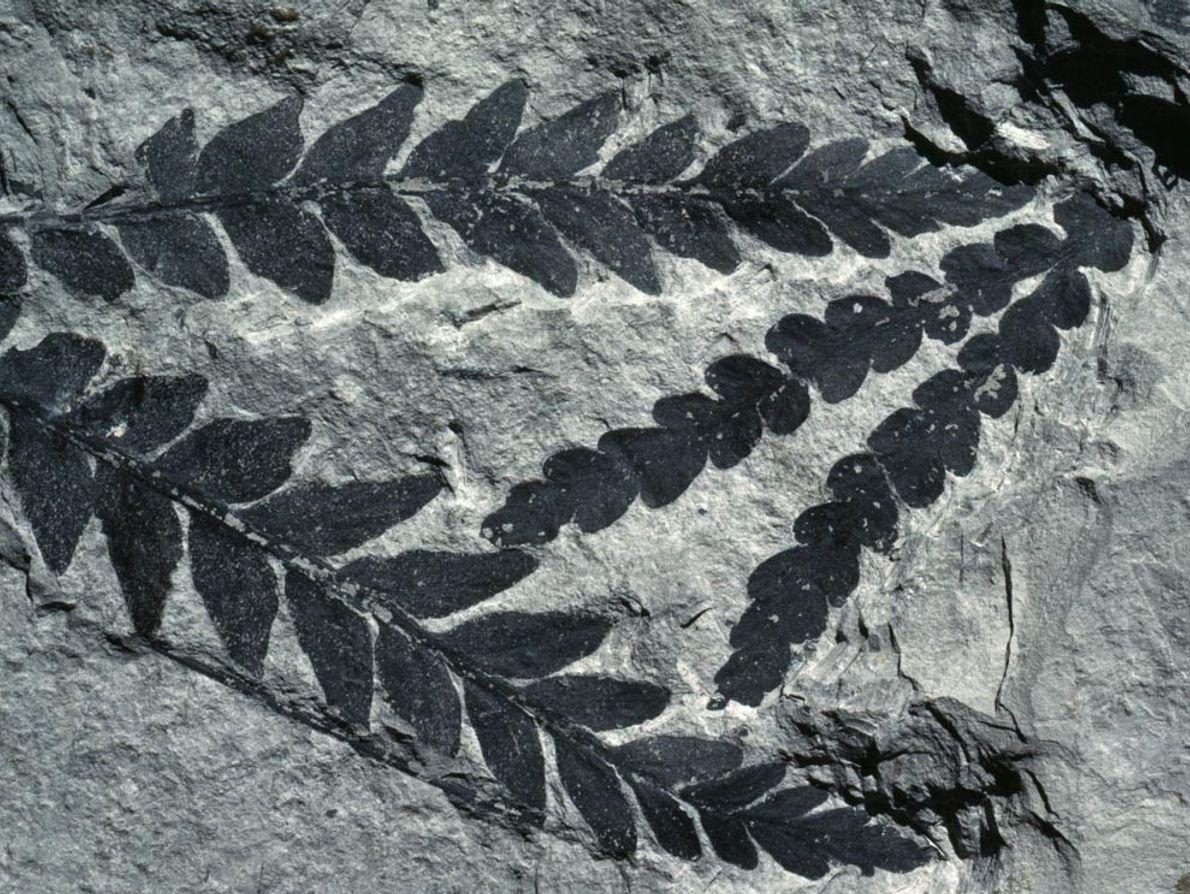 L'extinction de masse du Permien a quasiment fait table rase du passé en matière d'évolution, libérant ...