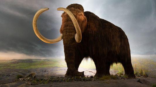 Le mammouth pourrait être ressuscité pour lutter contre le réchauffement climatique