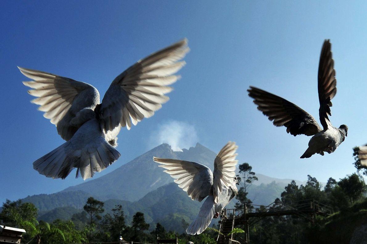Sur cette photographie prise le 4 juin 2018, des pigeons s'envolent pendant que frémit en arrière-plan ...
