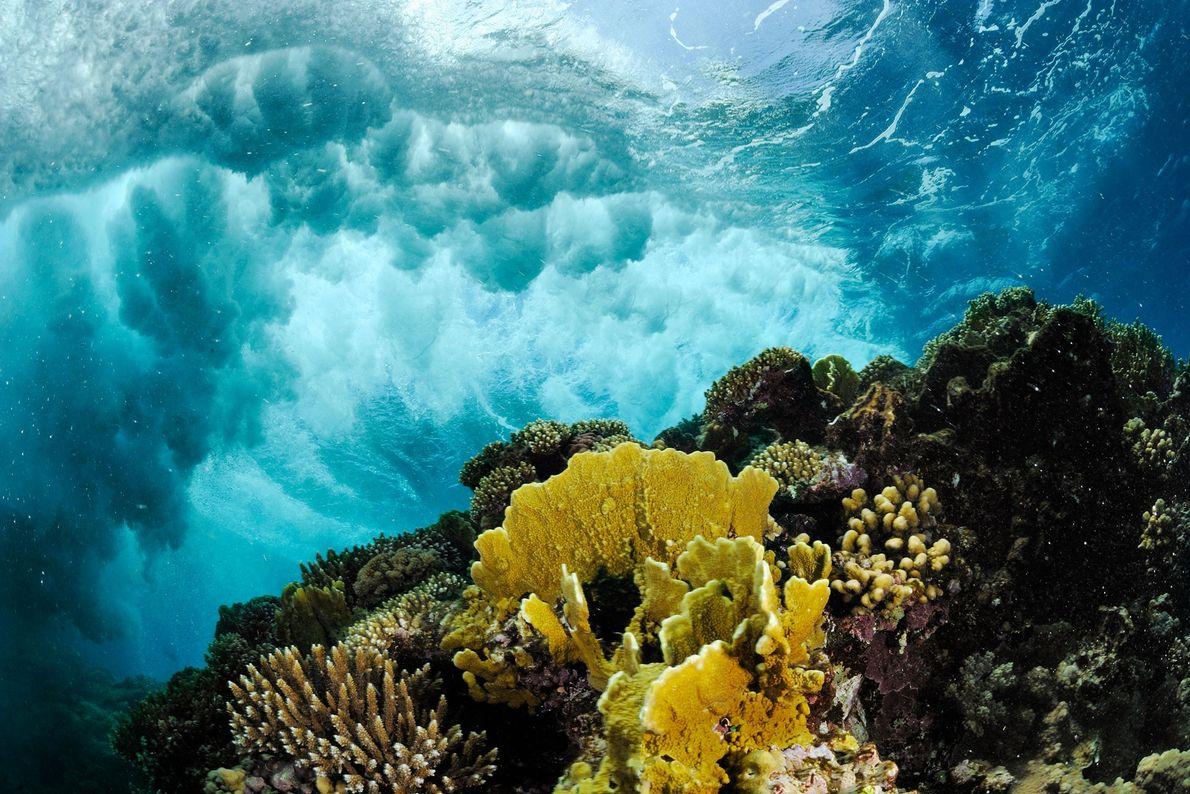 Les vagues déferlent sur une barrière de corail de la mer Rouge.