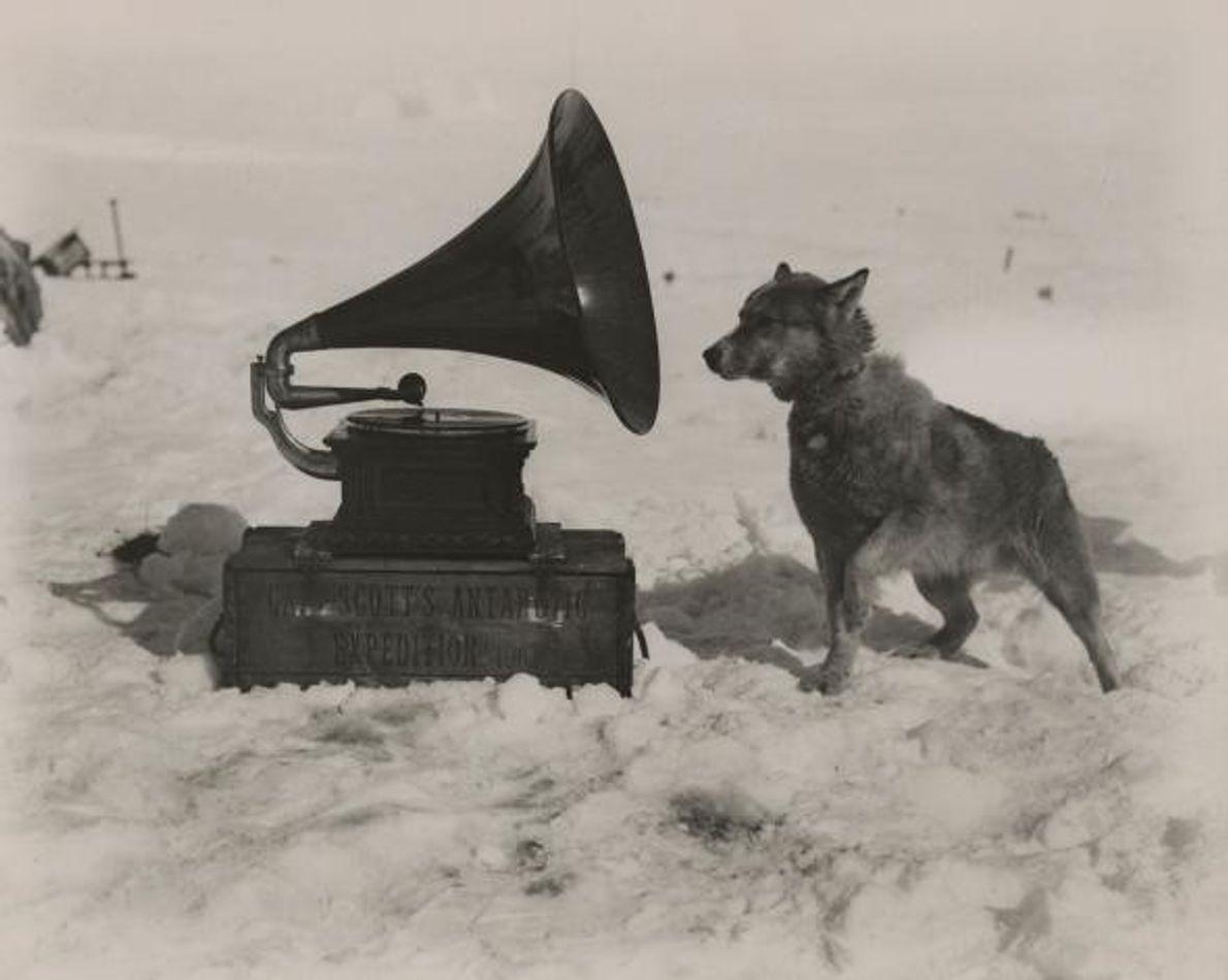 Lors d'une expédition vers le Pôle sud menée par le capitaine Robert Falcon Scott, un chien ...