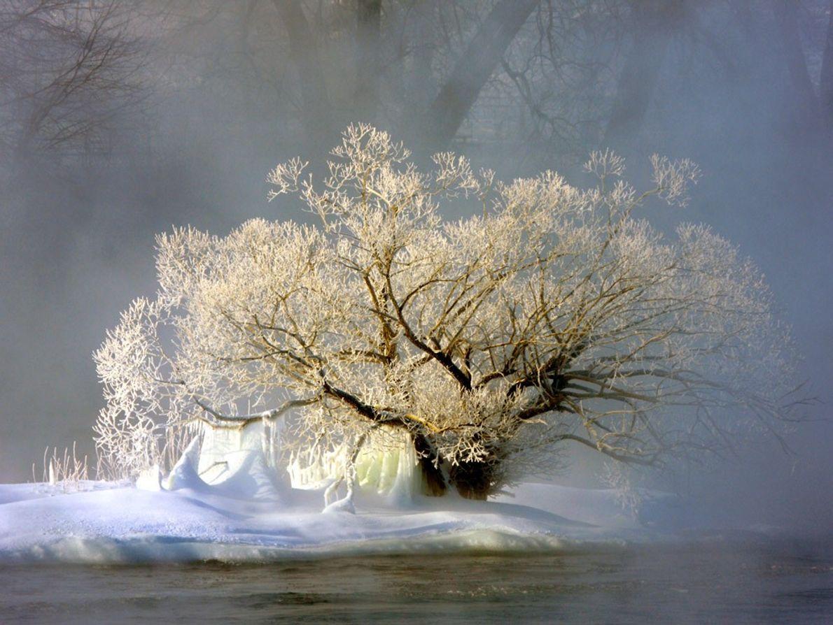 Enveloppé dans la brume, cet arbre couvert de givre s'apparente à un sentinelle perdu dans la ...