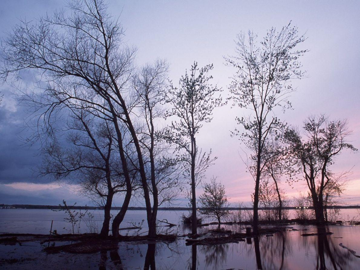 À Nauvoo dans l'Illinois, les ombres des arbres enracinés sur les berges du Mississippi dansent sur ...