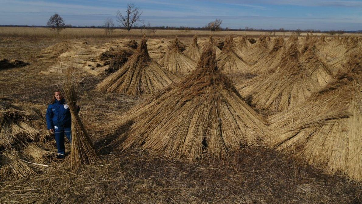 Hongrie : voici à quoi ressemblent ces piles de blé vues du sol.