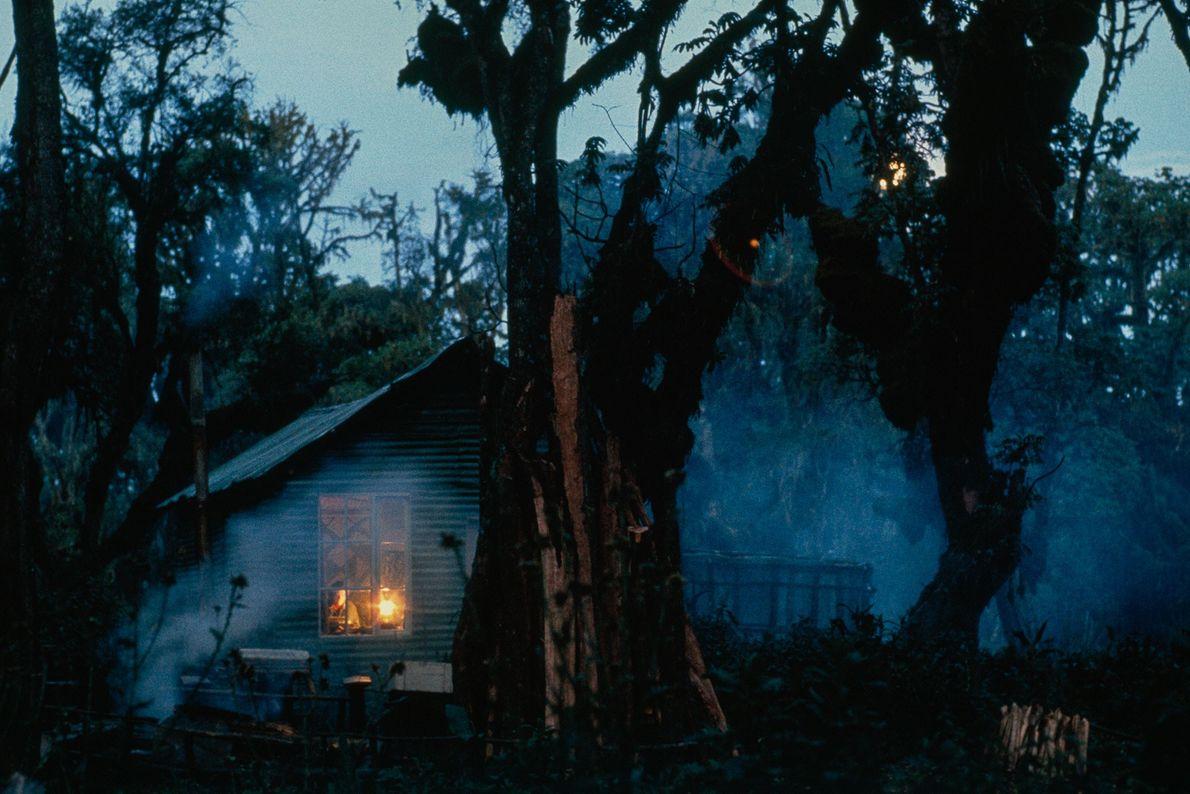 La vie de Dian Fossey a été rythmée par la solitude, au cœur de la forêt, ...