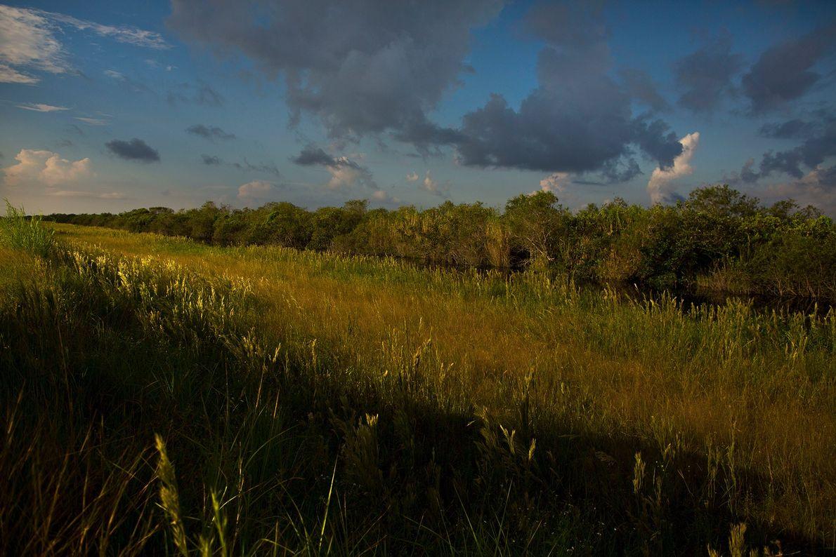 Parc national des Everglades, Floride