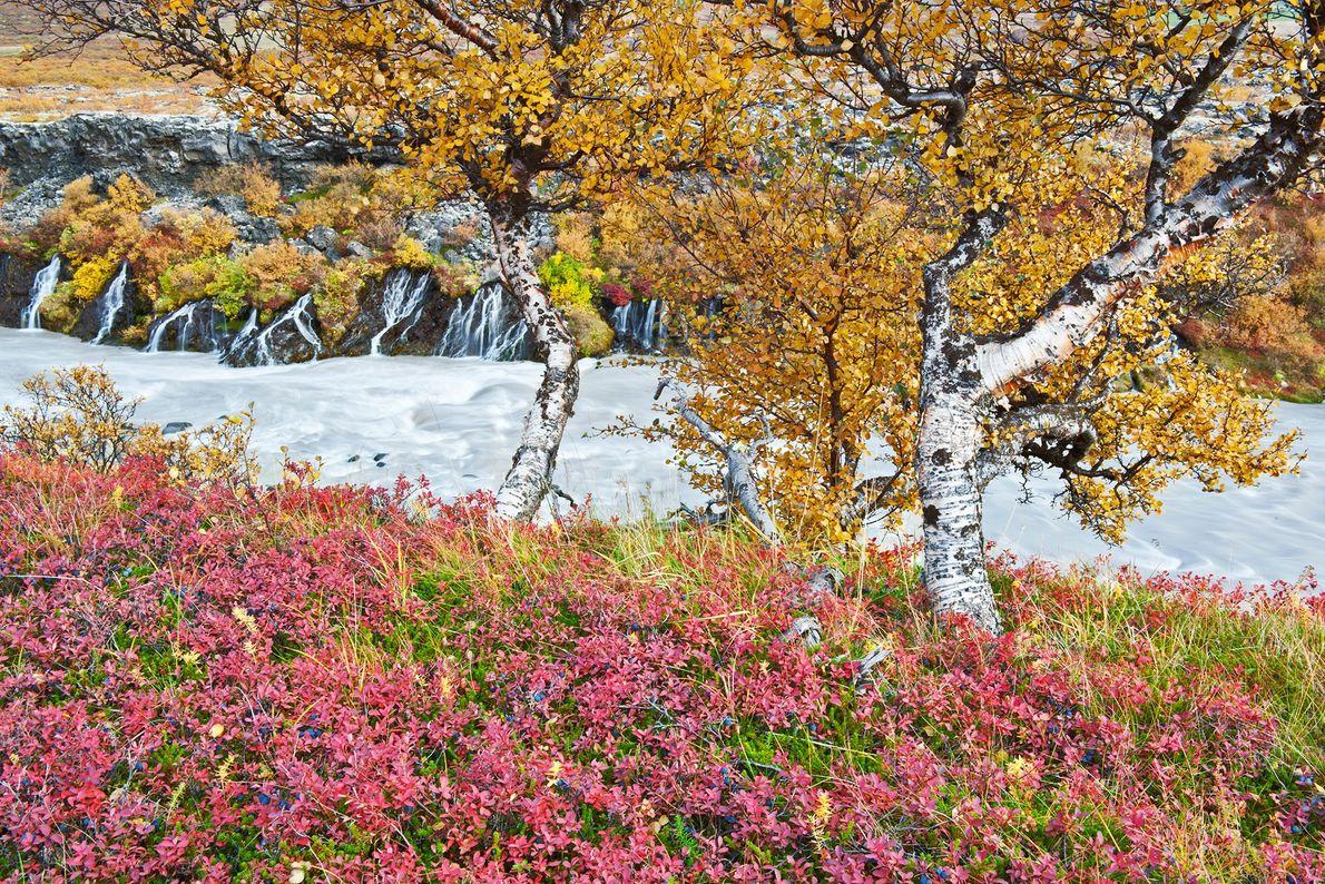 En septembre, la série de cascades Hraunfossar en Islande offre un paysage semblable à celui que ...