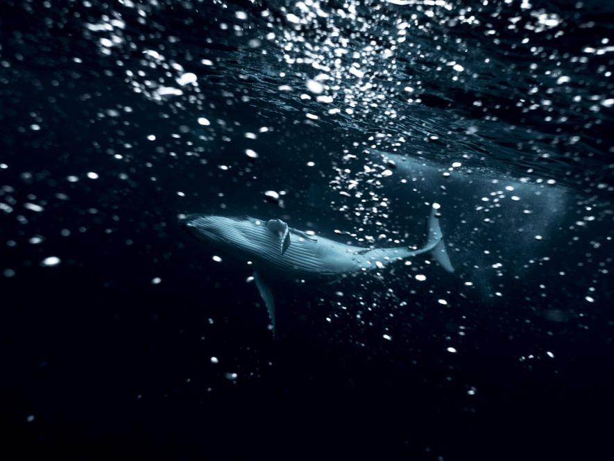 Michaela Skovranova, la photographe qui capture la force brute des océans