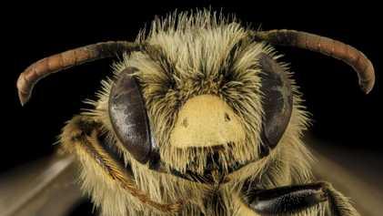 Le Canada projette d'interdire certains pesticides nocifs pour les abeilles et les insectes aquatiques