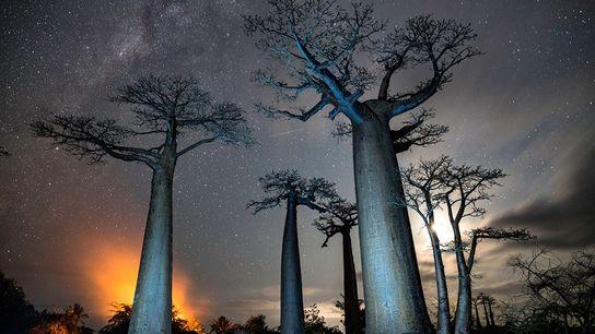 Baobabs sous la lune près de la ville de Morondava, en 2017. À l'arrière-plan, un incendie ...