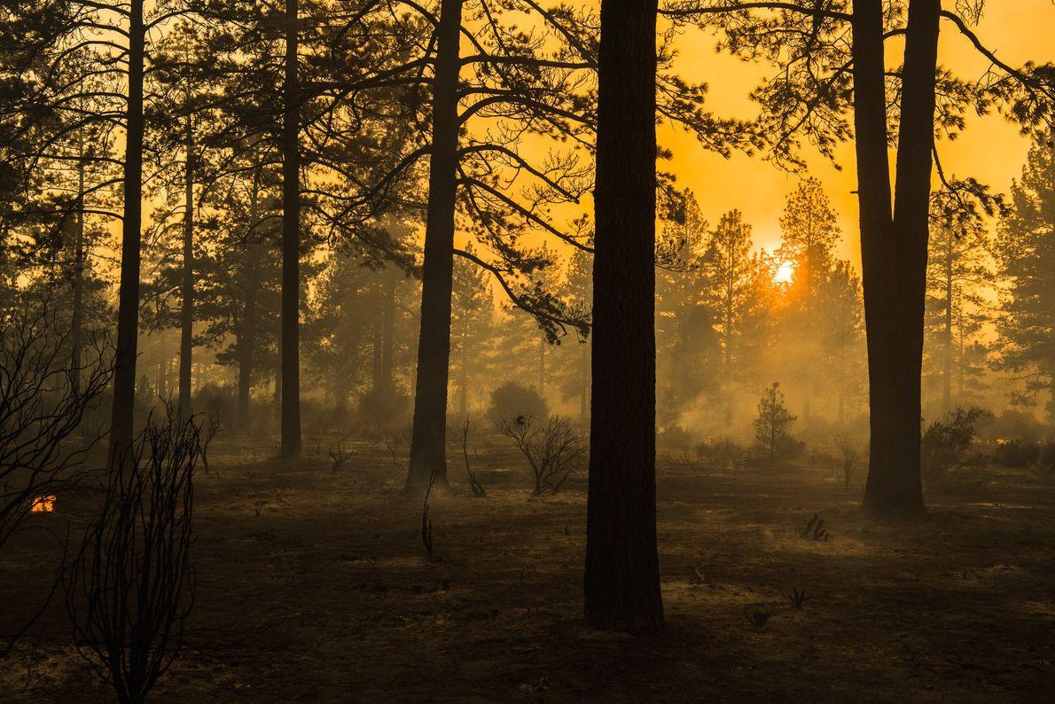 Après le passage du feu Cranston, de la fumée s'élève à Apple Canyon Road, près de ...