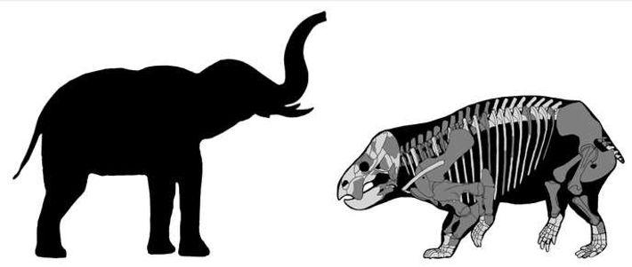 Le dicynodonte découvert par les chercheurs polonais faisait la taille d'un éléphant et était de ce ...