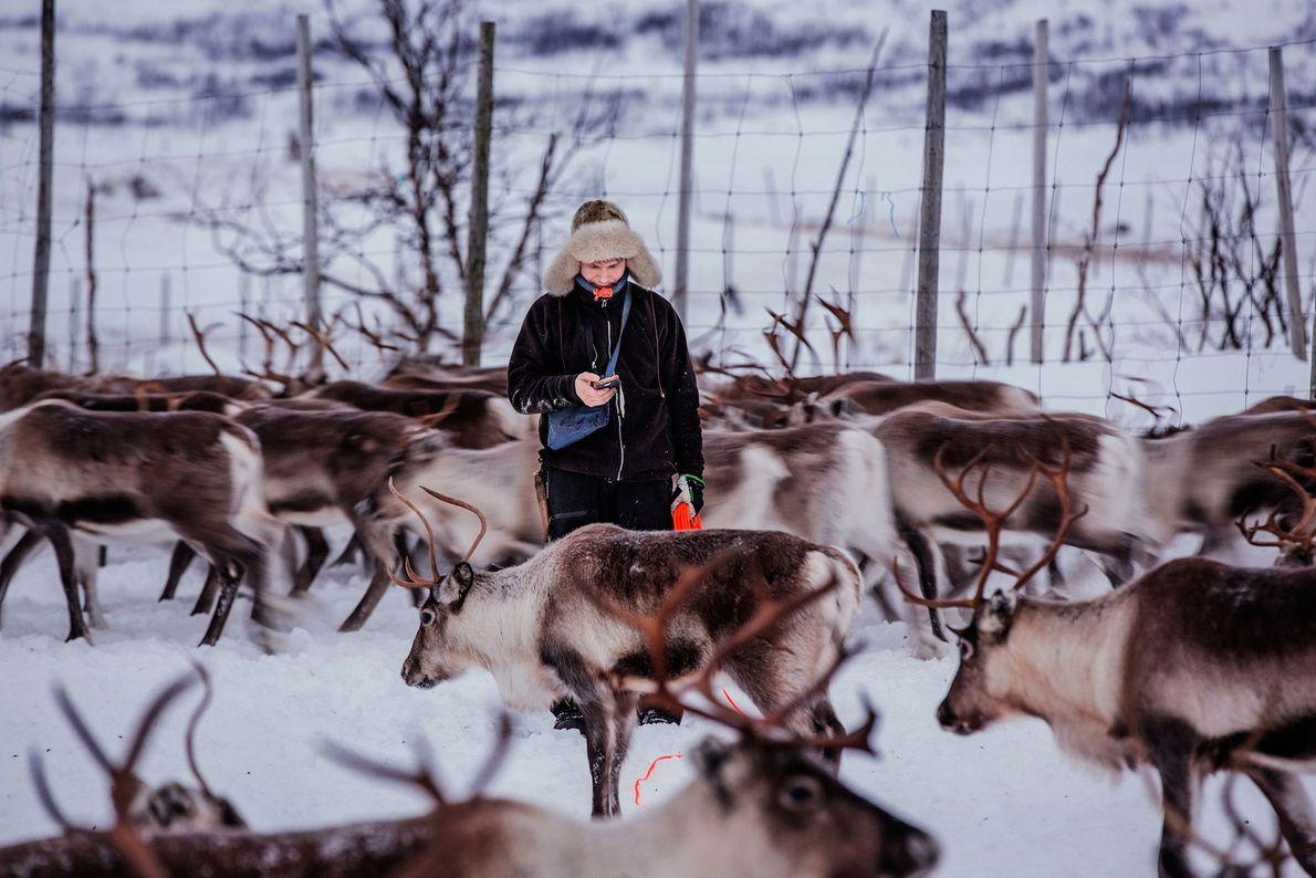 Image d'un élevage de rennes