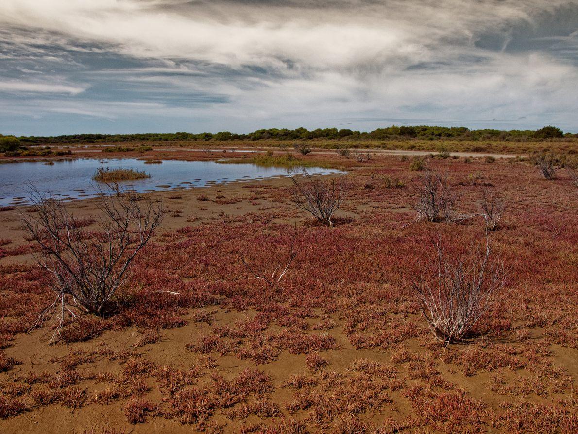 Un étang totalement asséché, en Camargue.