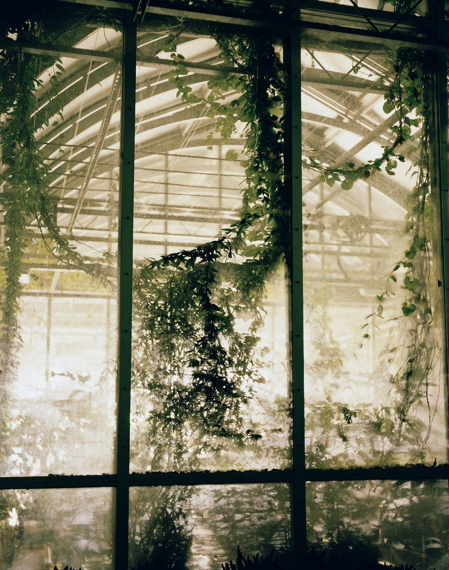 La Millennium Seed Bank fait partie des Jardins botaniques royaux de Kew en Angleterre. Cette réserve ...