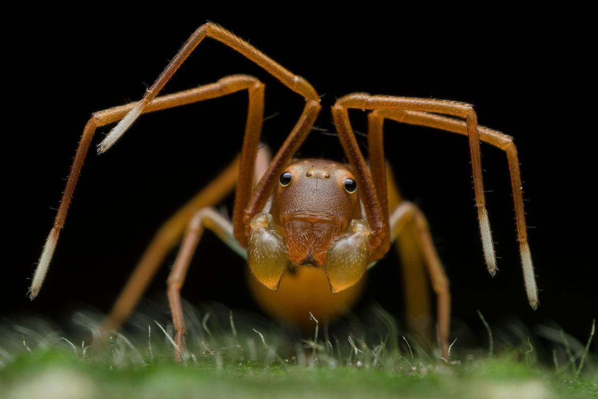 """Le photographe indien Ripan Biswas a été primé dans la catégorie """"portraits d'animaux"""" pour cette araignée-crabe ..."""