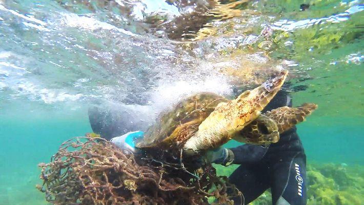 Sauvetage d'une tortue de mer prisonnière d'un filet de pêche