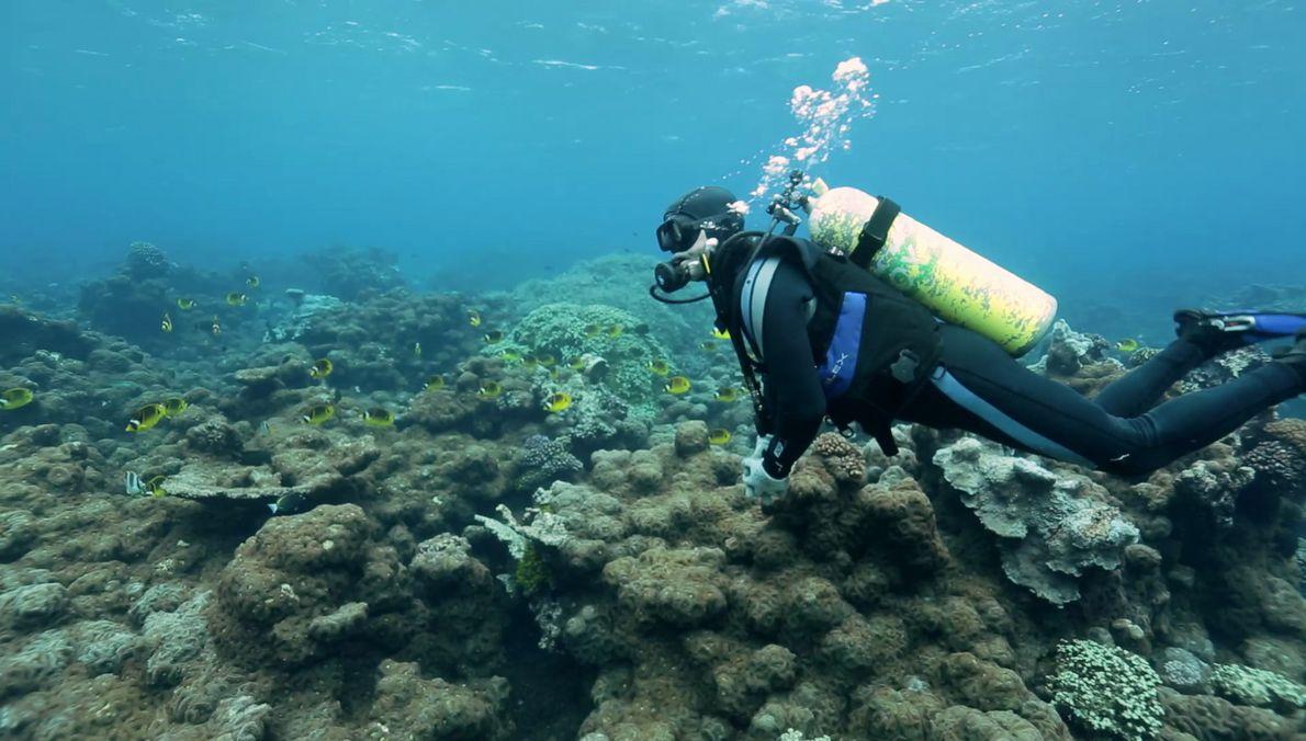 Plongée sous-marine avec la photographe Mikayla Wujec