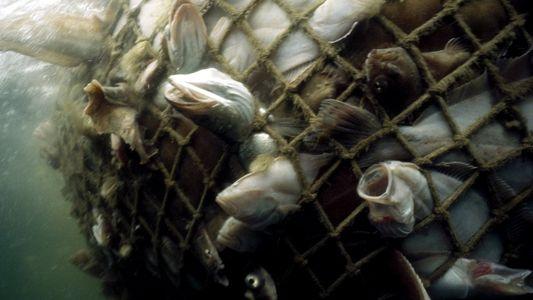 Comment la surpêche fait des ravages dans les océans