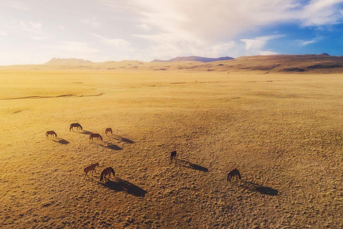 Des chevaux photographiés au Kirghizistan.