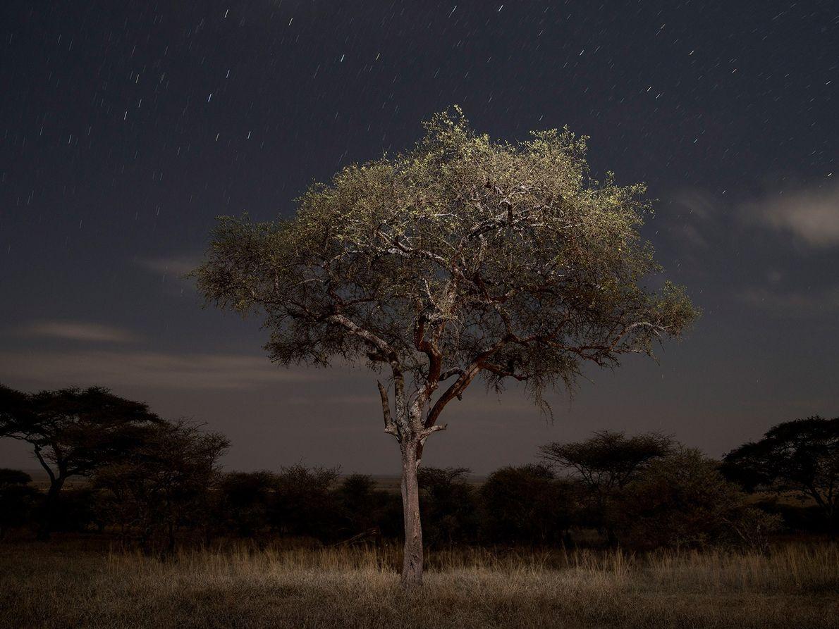 Après des journées de trekking dans les herbes hautes du parc national du Serengeti, la photographe ...