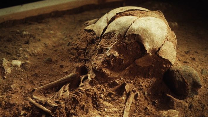 Le squelette d'un bébé de 8 400 ans retrouvé en Allemagne