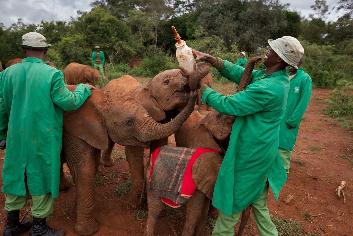 Au secours des éléphants