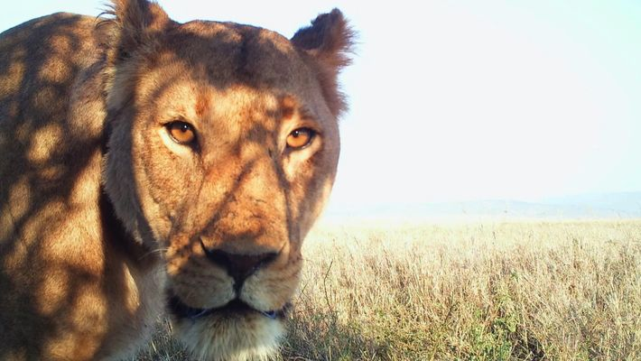 Les selfies des animaux de Serengeti