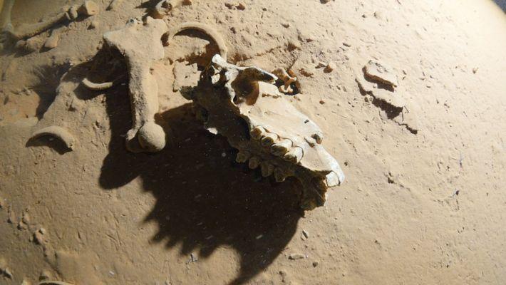 Perle rare : des fossiles de paresseux disparus découverts dans une grotte immergée