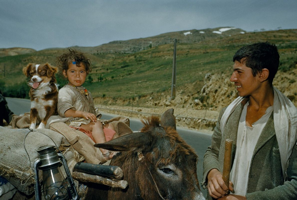 Liban, 1954 : une famille nomade se sert d'un âne en tant que charrette. Les peuples nomades ...