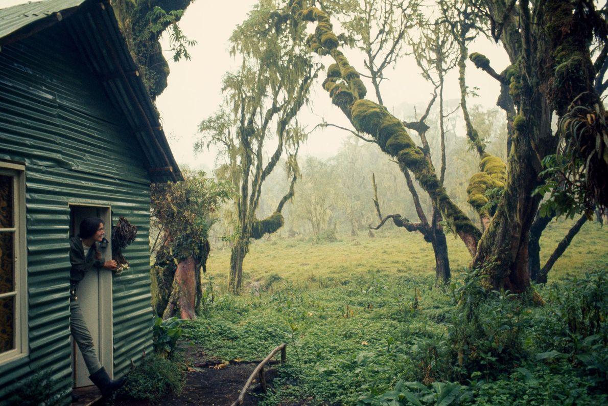 La porte de la maison de la scientifique ouvrait sur la jungle du parc national des ...